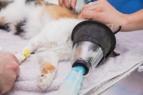 Servei d'urgències veterinàries